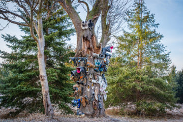 Shoe Tree, somewhere in Niagara